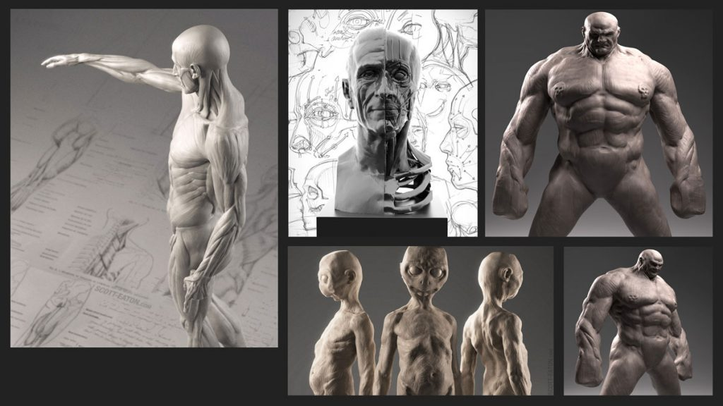 Scott Eaton Presents Essential Anatomy For Artists Bfx