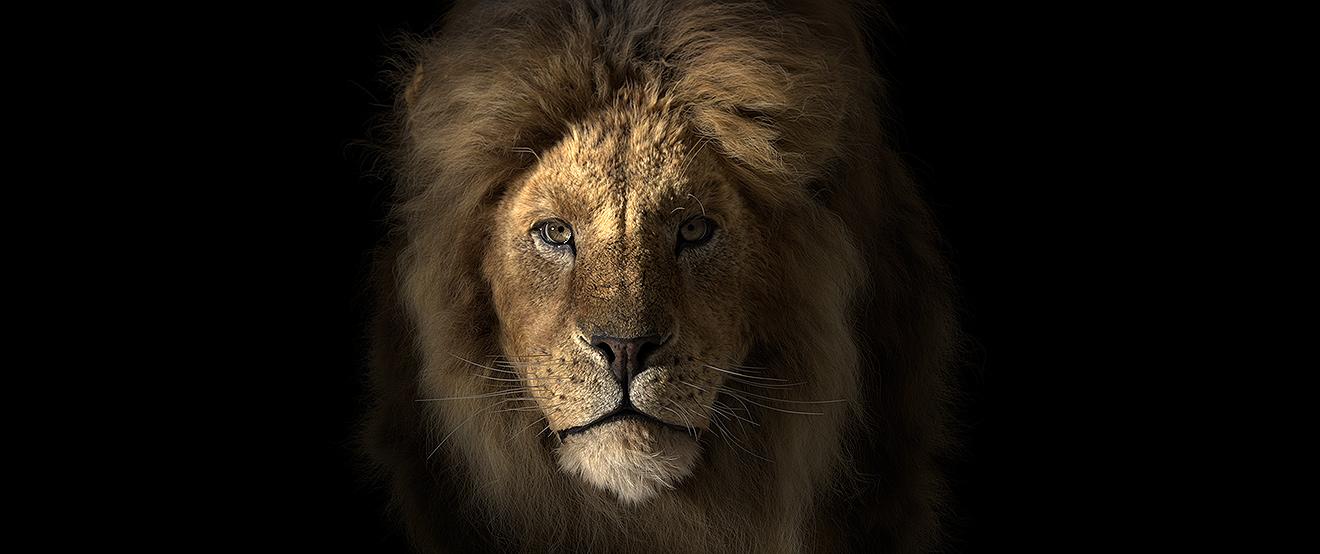 A Lion render